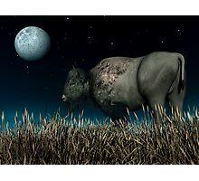 Bison Moon Photographic Print