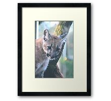 BABY PANTHER Framed Print