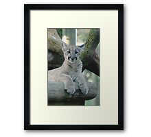 BABY PANTHER LOOKING Framed Print