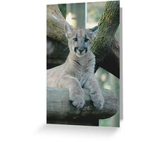 BABY PANTHER LOOKING Greeting Card