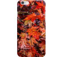 Fall Maple iPhone Case/Skin