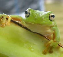 Green tree Frog by bites