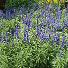 Blue Flowers by bluekrypton
