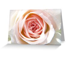 Pink Flower Up Close and Personal Greeting Card