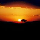 Mara Sunset by JaneRia
