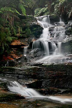 The Journey - Leura Cascades, Blue Mountains, NSW by Kim Roper