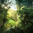 Sunrise on the trail by Ellen Cotton