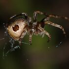 Incey wincey spider by David  Hall