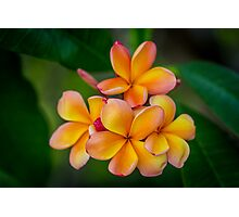 Apricot Frangipani Photographic Print