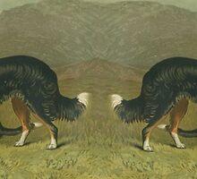 Two Sheepdogs by spotz