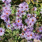 Purple Flowers by bluekrypton