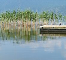 Pier and a cormoran in Prespes Lakes by IOANNA PAPANIKOLAOU