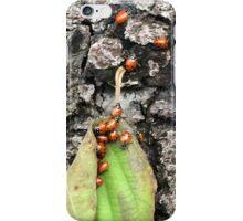 Yosemite Ladybugs in Leaf iPhone Case/Skin