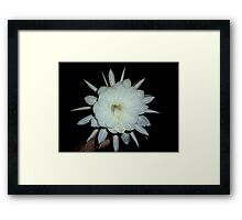 """""""QUEEN OF THE NIGHT"""" HERE TODAY.... Framed Print"""