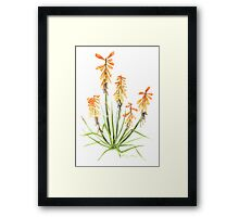 Red Hot Poker Aloe Plant in Watercolour Framed Print