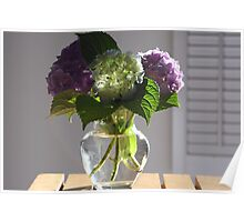hydrangea in glass vase in the morning light. Poster