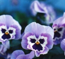 Lavender Pansies Sticker