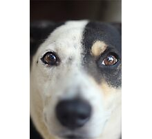 Peering Pooch Photographic Print