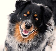 Snow Dog by J. D. Adsit