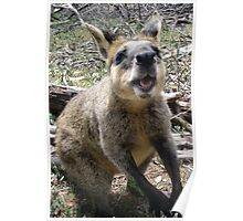 Wallaby Kisses Poster