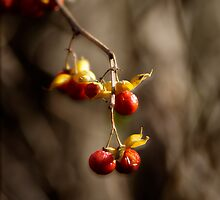 Berries by Rod  Adams