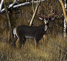 Buck in the Brush by Walter Colvin
