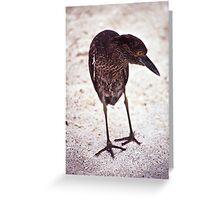 Lava Heron, Galapagos islands Greeting Card