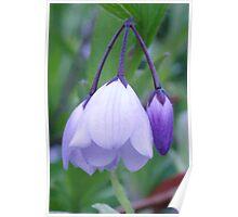 Purple Bells Poster