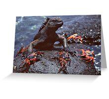 Marine Iguana and Sally Lighfoot Crabs Greeting Card