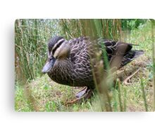Mother Duck's Friend Canvas Print