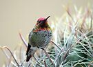 Sherbert Colored Hummer by Daniel J. McCauley IV