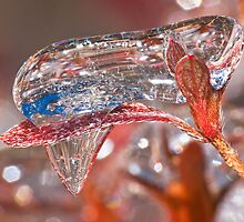 Backyard Icicle (9) by robkal