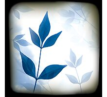 Blue Leaf Photographic Print