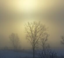 Winter Fog by ERick
