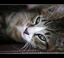 Squeak The Cat by PhotoBull