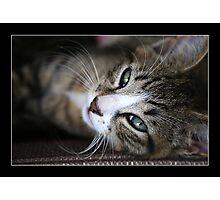 Squeak The Cat Photographic Print