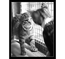 Squeak And Simba Photographic Print