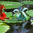 Meeting on the Lily Pad by Robyn Carter