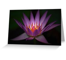 Waterlily Glow Greeting Card