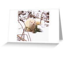 Frosty Ferret Greeting Card