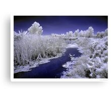 Fivebough Swamp Canvas Print