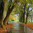 Park by Peco Grozdanovski