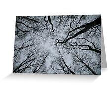 Root or Branch v 01 : Photography by Alys Griffiths Greeting Card