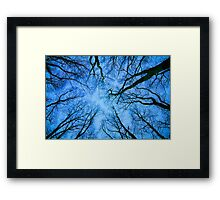 Root or Branch v 03 : Photography by Alys Griffiths Framed Print