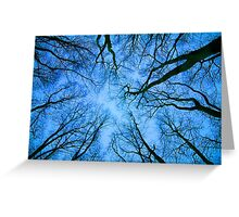 Root or Branch v 03 : Photography by Alys Griffiths Greeting Card