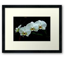 White Orchid Framed Print