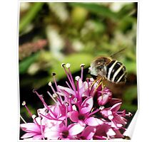 Striped Fly Poster