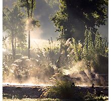Steamy Morning Koi Pond II Photographic Print