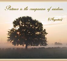 Patience is the Companion of Wisdom by aura2000