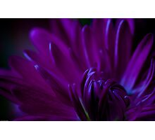 Passion Photographic Print